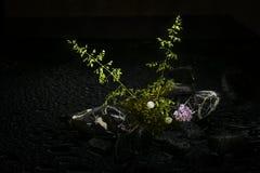 Fleurs de ressort en Autriche Photographie stock libre de droits