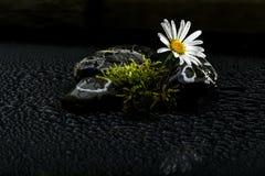 Fleurs de ressort en Autriche Image stock