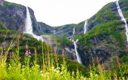 Fleurs de ressort en montagnes norvégiennes Photo stock