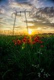 Fleurs de ressort et temps de coucher du soleil, Deva Image stock