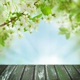Fleurs de ressort, feuilles vertes, lumière abstraite de Bokeh Photographie stock