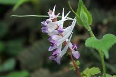 Fleurs de ressort photo stock