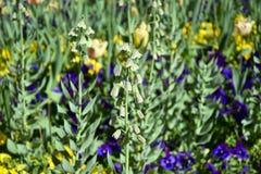 Fleurs de ressort ? l'arri?re-plan de jardin E photographie stock
