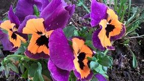 Fleurs de ressort de plentiness image stock