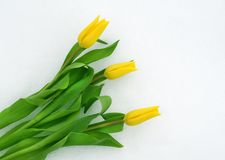 Fleurs de ressort sur la neige Image stock