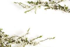Fleurs de ressort sur le blanc Cadre floral rose photographie stock