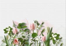 Fleurs de ressort sur le fond de livre blanc carte de voeux avec la station thermale Photos stock