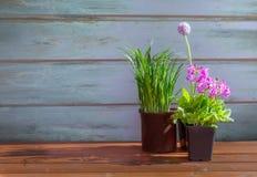 Fleurs de ressort sur le fond en bois Image libre de droits