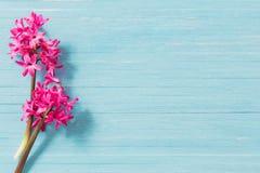 Fleurs de ressort sur le fond en bois bleu photographie stock