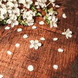 Fleurs de ressort sur un fond en bois photographie stock libre de droits