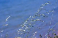 Fleurs de rivière de Minho Photos libres de droits