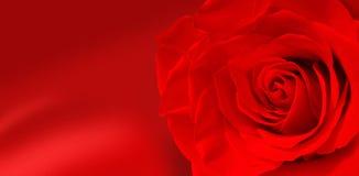 Fleurs de Rose Photo stock