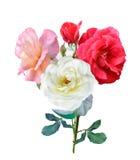 Fleurs de Rose Images stock