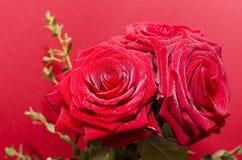 Fleurs de Rose Photo libre de droits