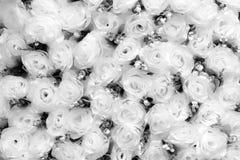 Fleurs de Rose dans noir et blanc Image libre de droits