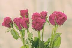 Fleurs de rose de cramoisi, modifiant la tonalité Images libres de droits