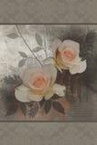 Fleurs de rose de rose illustration libre de droits