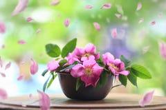 Fleurs de rose de rose montrées dans une tasse rustique de bidon image stock