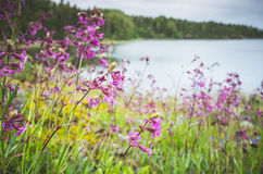 Fleurs de rose sauvage, fond d'été Photographie stock