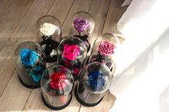 Fleurs de roses dans le dôme en verre Image stock