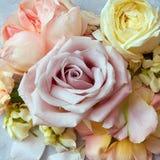 Fleurs de roses dans le style de couleur de vintage Image libre de droits