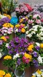 Fleurs de rue images stock