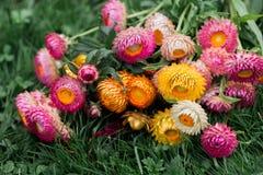 Fleurs de séchage Photo libre de droits