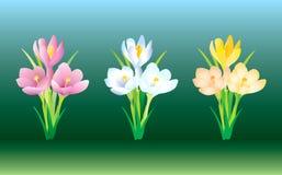 Fleurs de safran illustration de vecteur