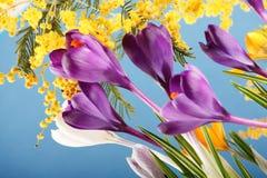 Fleurs de safran de vacances de source Photographie stock libre de droits