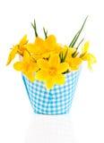 Fleurs de safran en soleil de printemps