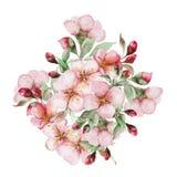 Fleurs de Sakura d'aquarelle Photographie stock libre de droits