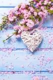 Fleurs de Sakura de ressort et coeur décoratif blanc sur en bois bleu Images stock