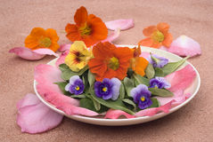 Fleurs de salade Photo stock