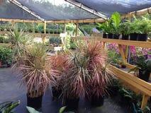 Fleurs de serre chaude d'Anguilla photo stock