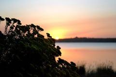 Fleurs de silhouette et un coucher du soleil Image stock