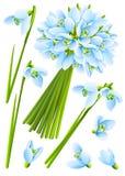 Fleurs de snowdrop de source illustration stock