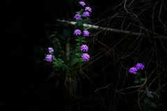 Fleurs de soirée images libres de droits