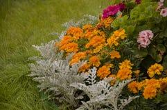 Fleurs de soucis sur le parterre d'automne photographie stock