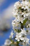 Fleurs de source Photographie stock libre de droits
