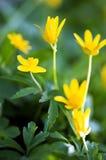 Fleurs de source Photos libres de droits