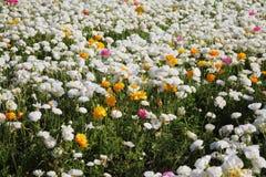 Fleurs de source Images libres de droits