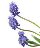Fleurs de source. images libres de droits