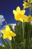 Fleurs de source Photographie stock