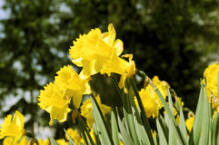 Fleurs de source Images stock