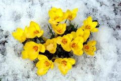 Fleurs de source. Image libre de droits