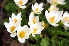 Fleurs de source. Photo libre de droits