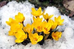 Fleurs de source. Photographie stock libre de droits