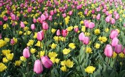 Fleurs de source photo stock