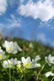 Fleurs de source Image stock