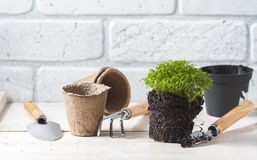 Fleurs de source avec des outils de jardin Photo stock